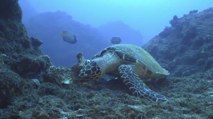 La plongée sous-marine à la Réunion