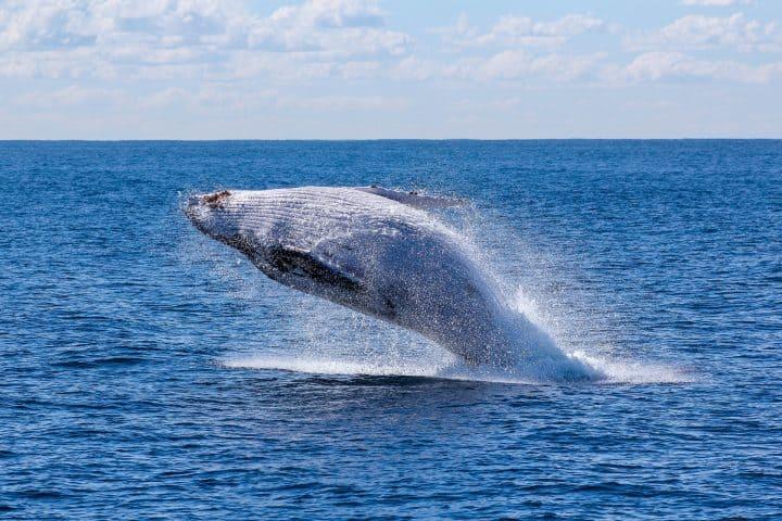Nager avec les baleines à la Réunion
