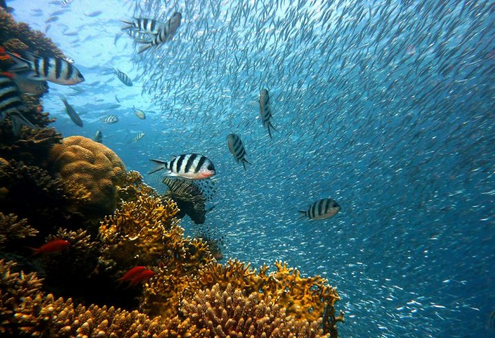 Découvrir la beauté des fonds marins avec le festival de l'Image sous-marine
